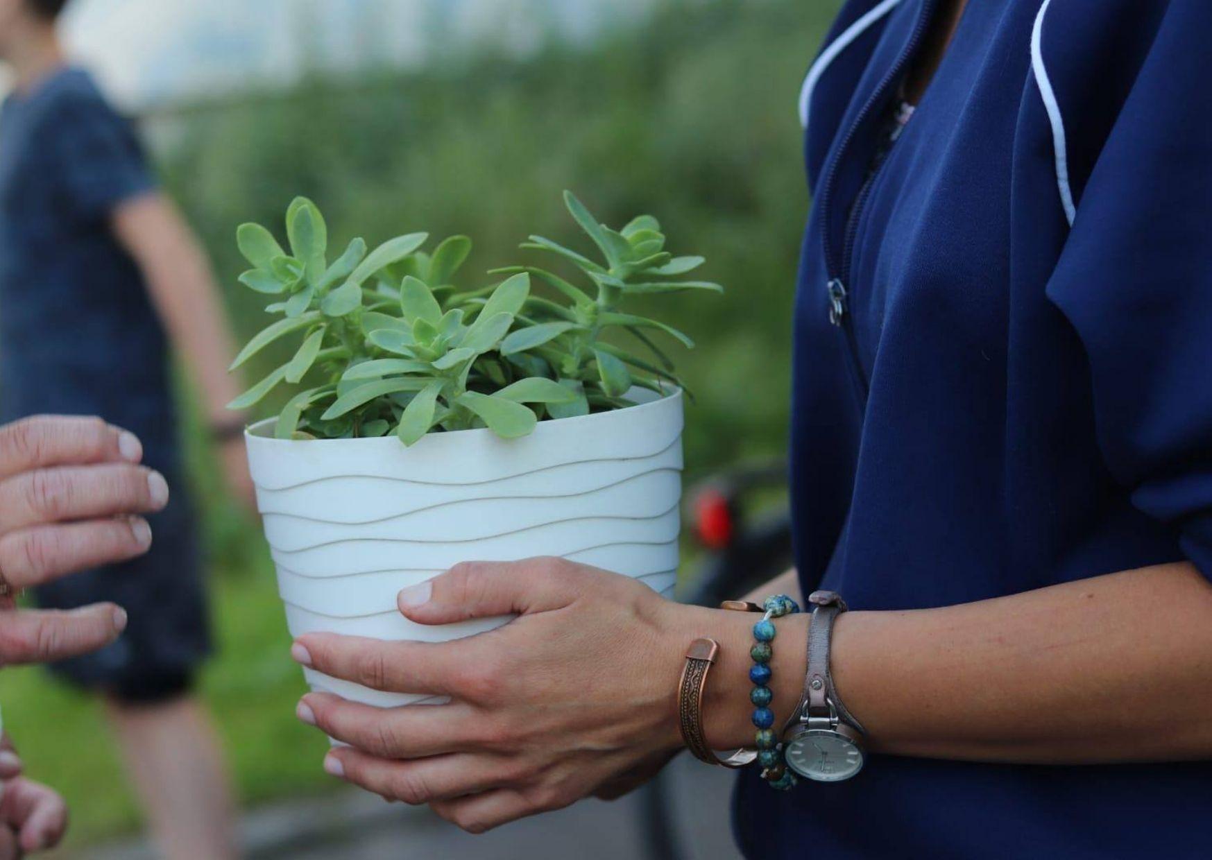 Na zdjęciu kwiatek w doniczce trzymany w dłoniach uroczej osoby.